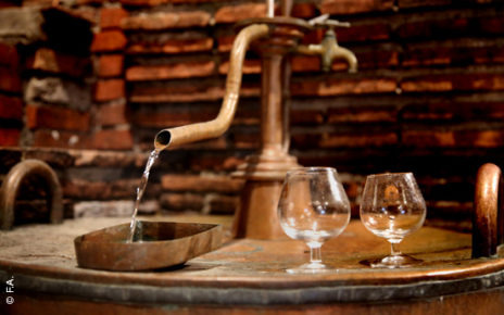 Distillation Ognoas